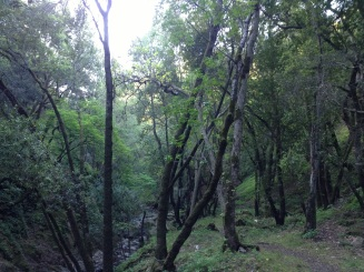 Love the fact that Alum Rock Park has dry hills and this lush area...