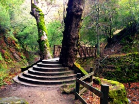 Bridge that joins the Creek Trail and the South Rim Trail. Perfect place for a bridge...